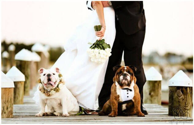 Dicas para Incluir o Pet na Cerimônia